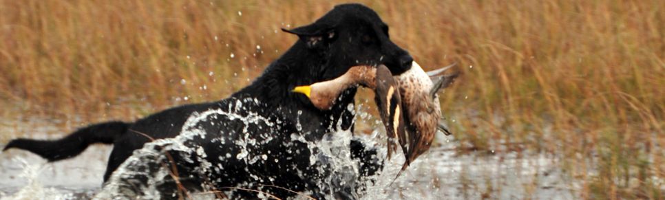 Los_Crestones_Lodge_Duck_and_Perdiz_Hunting_Holidays_Buenos_Aires_Argentina_4.jpg